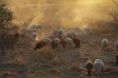 Dry pasture Stock Image