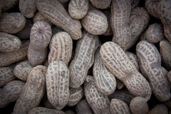 Dry peanut Royalty Free Stock Images