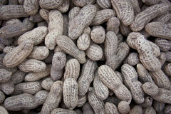 Dry peanuts Royalty Free Stock Images