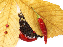 Dry pepper Royalty Free Stock Image