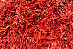 Dry pepper Stock Images