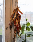 Dry pepper on the window Royalty Free Stock Photos