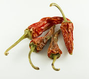 Dry peppers royalty free stock photo
