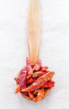 Dry peppers in wooden spoon Stock Image