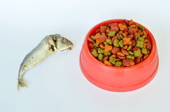 Dry pet food is better choice for feeding cat more than fresh mackerel Royalty Free Stock Photos