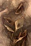 Dry petals of Calla stock images