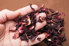 Dry petals of organic hibiscus for tea in hand royalty free stock photography