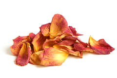 Dry petals of rose Stock Photography