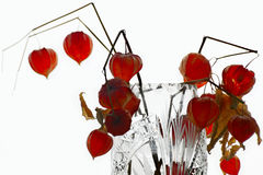 Dry physalis in a vase Stock Photos