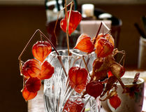 Dry physalis in a vase Stock Photo