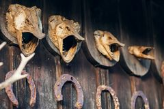 Dry pike head. On wooden wall Royalty Free Stock Images