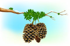 Dry Pine. Illustration of dry pine fruit in tree branch Stock Photos