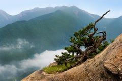 Dry pine against cloudy seorak mountains at the Seorak-san Stock Image