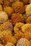 Dry pine cones Royalty Free Stock Photography