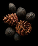Dry pine cones Stock Photos