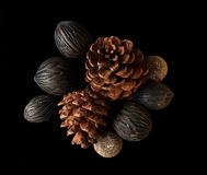 Dry pine cones Royalty Free Stock Photo
