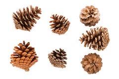 Dry pine cones Royalty Free Stock Image