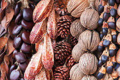 Dry pine cones and other seeds Royalty Free Stock Image