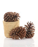 Dry pine cones on white background Royalty Free Stock Photo