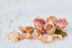 Dry pink roses over white lace Stock Image