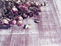 Dry pink roses on a wooden textural background. Royalty Free Stock Photos