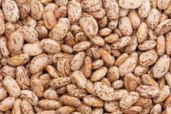Dry Pinto Beans Royalty Free Stock Photos