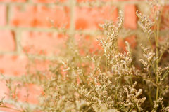 Dry plant on brick wall. Closeup of dry plant on brick wall stock photos