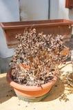 Dry plant Stock Photo