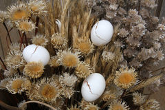 Dry plant and eggshell Royalty Free Stock Image