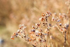 Free Dry Plant Flowers At Winter Stock Images - 114812904