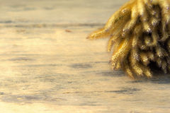Dry Plant Flowers. Dried flower on wooden background. Gold color tone Stock Photos
