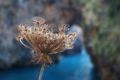 Dry plant. Stock Image