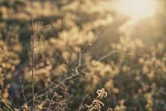 Dry plant full of spider net against the sun light Stock Photo