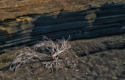 Dry plant near layers of volcanic soil Royalty Free Stock Images