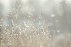 Dry plant over field background Stock Photo
