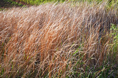 Dry  Plant in river side Royalty Free Stock Image