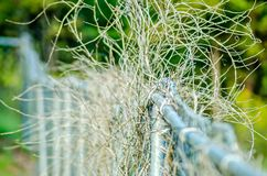 Dry plant vines destroying chainlink fence. Dry plant vines destroying chainlink  fence Royalty Free Stock Image