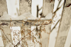 Dry plant at white fence background Royalty Free Stock Photography