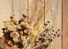 Dry plant and wood Royalty Free Stock Images