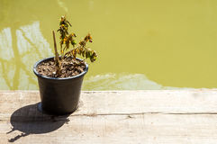 Dry plant on wooden. Royalty Free Stock Images