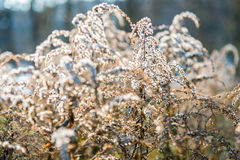 Free Dry Plants Stock Image - 50902261