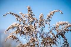 Dry plants Royalty Free Stock Image