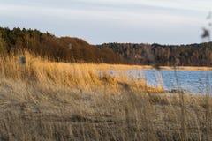 Dry plants on the Baltic Sea coast Stock Photos