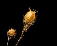 Dry plants Stock Photo