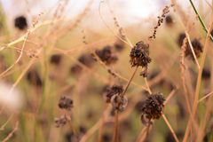 Dry plants on bush Stock Photography