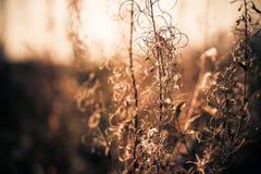 Dry plants closeup Royalty Free Stock Photography