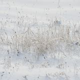 Dry plants covered with ice. Winter season. Plants in the countr. Yside. Winter in the village. Weather in the winter Stock Images