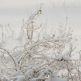 Dry plants covered with ice. Winter season. Plants in the countr. Yside. Winter in the village. Weather in the winter Stock Photography