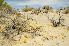 Dry plants on the desert Royalty Free Stock Images