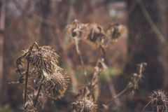 Dry plants. Brush royalty free stock photography